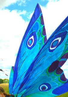 Silk Painted Moth wings